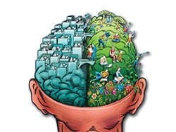 snellezen en mindmappen